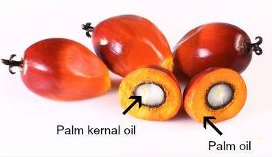YS棕榈核油棕榈油植物油媒介油